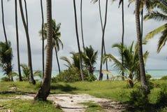 海滩植被桑给巴尔 免版税库存照片