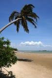 海滩植被 免版税库存照片