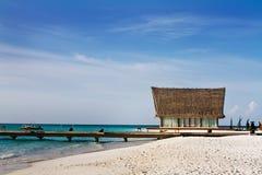 海滩椰子横卧结构树 库存照片