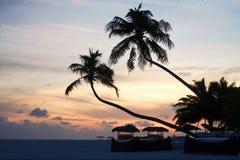 海滩椰子横卧结构树 免版税图库摄影