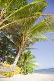 海滩椰树热带吊床的掌上型计算机 免版税库存照片