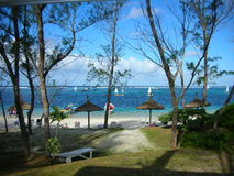 海滩椰树le毛里求斯手段 免版税库存照片