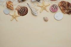 海滩概念贝壳暑假 壳和石头的混合在象牙背景与拷贝空间文本的 顶视图 库存照片
