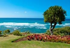 海滩檀香山结构树 免版税库存照片