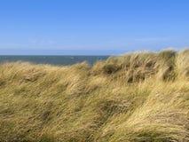 海滩沙丘欧洲草滨草 免版税库存照片