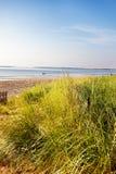 海滩沙丘草缅因 免版税库存照片