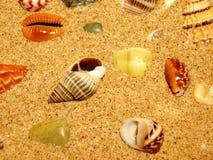 海滩沙子壳 库存照片