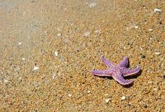 海滩沙子海星 免版税图库摄影