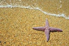 海滩沙子海星 图库摄影