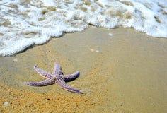 海滩沙子海星 库存照片