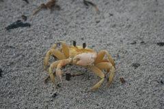 海滩沙子螃蟹 免版税库存图片
