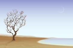 海滩沙漠 向量例证