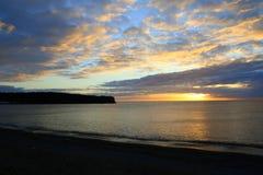 海滩河鳟鱼 免版税库存照片