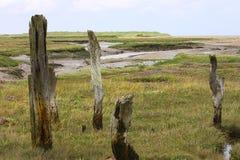 海滩沼泽地 库存照片