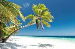 海滩海岛掌上型计算机天堂结构树 免版税库存照片