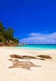 海滩海岛praslin热带的塞舌尔群岛 免版税库存照片