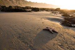 海滩海星 免版税库存图片