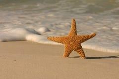 海滩海星 库存照片