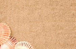 海滩海运壳 免版税图库摄影