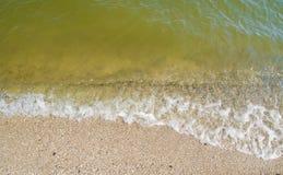 海滩海运壳 库存图片