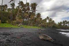 海滩海龟 免版税库存照片