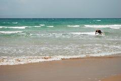 海滩游泳 免版税库存照片