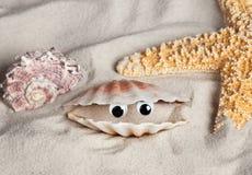 海滩滑稽的贝壳 库存照片