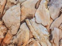 海滩漂流木头部分  图库摄影