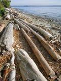 海滩漂流木头 免版税图库摄影