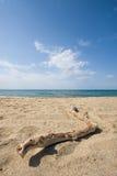 海滩漂流木头 免版税库存图片