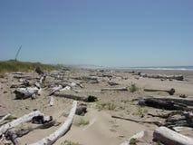 海滩漂流木头 免版税库存照片