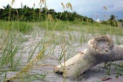 海滩漂流木头 库存照片