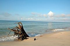 海滩漂流木头 图库摄影