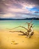 海滩漂流木头jocassee湖横向 免版税图库摄影