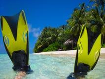 海滩潜水飞翅屏蔽 库存图片
