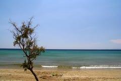 海滩灌木 库存照片