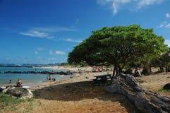 海滩热带夏威夷的考艾岛 免版税库存图片