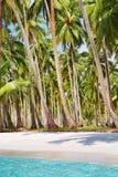 海滩热带树丛的掌上型计算机 库存图片