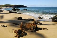 海滩热带的夏威夷 库存图片