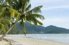海滩热带的棕榈树 免版税图库摄影