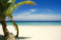 海滩热带的棕榈树 免版税库存照片