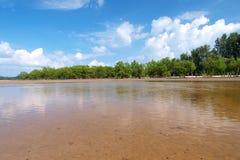 海滩热带美洲红树的结构树 免版税库存照片