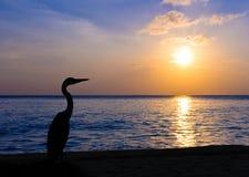 海滩热带苍鹭的日落 库存图片