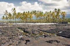 海滩熔岩掌上型计算机全景树型视图 免版税图库摄影