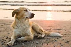 海滩狗 库存照片