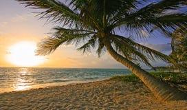 海滩玛雅人里维埃拉日出 免版税库存图片