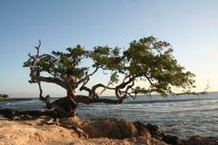 海滩珍宝结构树 库存图片