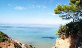 海滩生叶热带的结构树 免版税库存图片