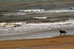 海滩疾驰的马 免版税库存图片