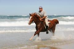 海滩疾驰的马 库存照片